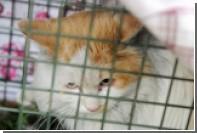 Сидевшего в ловушке два года китайского кота освободили