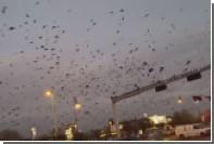 Необъяснимое нашествие птиц в США попало на видео