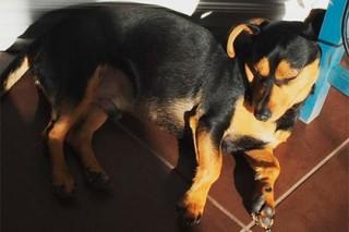 Олимпийская чемпионка спасла собаку от корейских гурманов