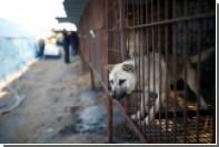 Корейцы угостят гостей Олимпиады собачатиной
