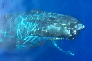 Группу туристов на лодке «поприветствовал» горбатый кит