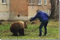 Выгуливавший медведя без намордника житель Таганрога заинтересовал полицию