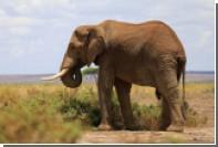 Слониха до смерти забила хоботом сотрудника зоопарка в Японии