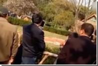 Китаец забросал спящих кенгуру камнями ради удачного кадра
