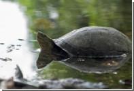 В Таиланде из желудка черепахи Копилка извлекли пять килограммов монет