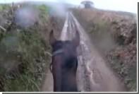 Бывшая скаковая лошадь напугала наездника быстрым бегом