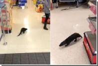 В Ирландии выдра прогулялась по супермаркету и укусила покупателя