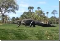 Гигантский аллигатор прервал турнир по гольфу в Южной Каролине