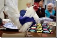 Американские пенсионеры связали одежду для мерзнущих кур