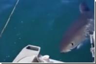 Гигантская акула напугала новозеландского рыболова