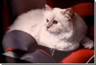 У кошки Карла Лагерфельда украли Instagram-аккаунт