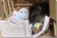 Британка поселила хомячиху в кукольном доме и научила есть с ложки