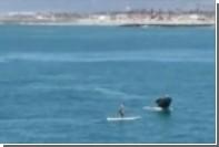 Серфингист на Гавайях встретил четверых горбатых китов