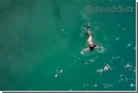 Попытку нападения акулы на ныряльщицу сняли с воздуха