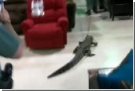 Во Флориде аллигатора протащили по магазину мебели