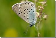 Британского коллекционера признали виновным в убийстве бабочек