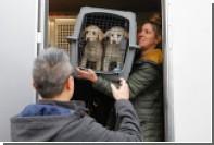В Южной Корее защитники животных спасли от съедения десятки собак