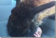 Прожорливая лама довела ребенка до истерики
