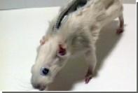 Британский студент предложил покупателям пеналы из мертвых грызунов