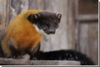 В зоопарке Екатеринбурга выбрали лучшую самку