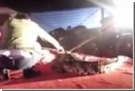 Крокодил укусил сотрудника вьетнамского цирка во время представления