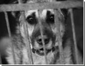 Для спасения от массового живодерства псов Дагестана решили посадить