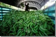 Испанская полиция обнаружила 17 килограммов кокаина в партии резиновых бананов