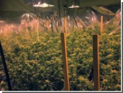 В Израиле декриминализовали употребление марихуаны