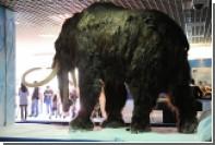 Выявлена причина гибели последних мамонтов на Земле