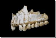 Неандертальцев уличили в использовании антибиотиков и аспирина