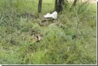 Змеелов помешал гигантскому питону доесть антилопу в Гроблерсдале