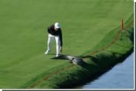 Американский гольфист столкнул аллигатора с поля во время игры
