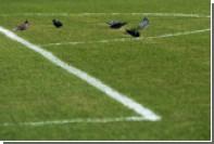 УЕФА отреагировал на состояние газона стадиона «Ростова»