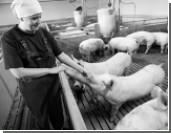 Медведев велел разобраться с парадоксом цен на мясо