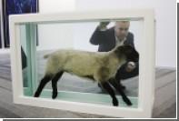 Названо число использованных Дэмиеном Херстом в искусстве мертвых животных