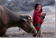 В Пакистане устроили конкурс красоты для буйволов