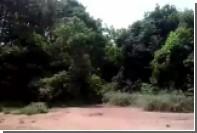 Бразильские дальнобойщики «оживили» умирающего от жары гривистого волка