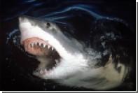 В Австралии акула убила 17-летнюю серфингистку