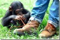 Ученые объяснили феномен развязывающихся шнурков