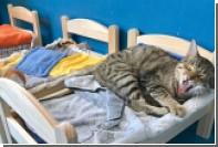 IKEA подарила кукольные кроватки кошкам из канадского приюта