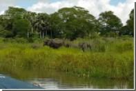 Слон помешал крокодилу утащить слоненка за хобот