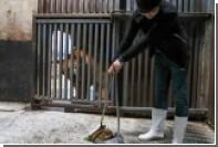 В Китае зоопарк позволил посетителям убирать медвежий помет за деньги