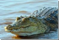 Крокодил откусил туристу ногу в Африке