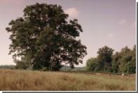 В Огайо срубили 200-летний дуб из «Побега из Шоушенка»