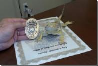 В США ящерица стала офицером полиции