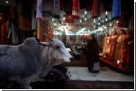 В индийском штате ввели пожизненное заключение за убийство коровы