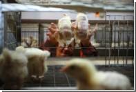 Суд признал агрохолдинг «Разгуляй» банкротом