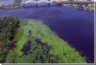 Украинцы научились добывать газ из водорослей