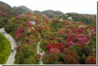 Определено число видов деревьев в мире