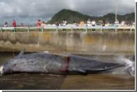 Японские китобои убили 333 полосатика в Антарктике